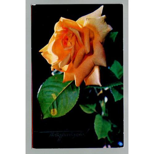 Поздравительная почтовая открытка лот 12096