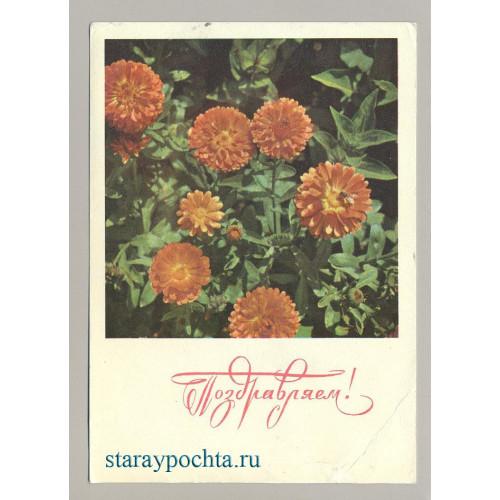 Поздравительная почтовая открытка лот 164