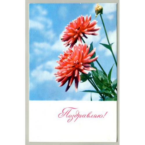 Поздравительная почтовая открытка лот 16498