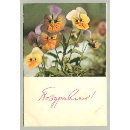Поздравительная почтовая открытка лот 16575