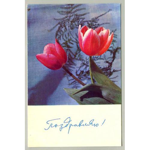 Поздравительная почтовая открытка лот 16606