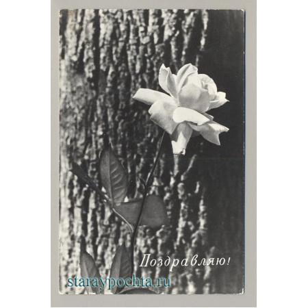 Поздравительная почтовая открытка лот 171