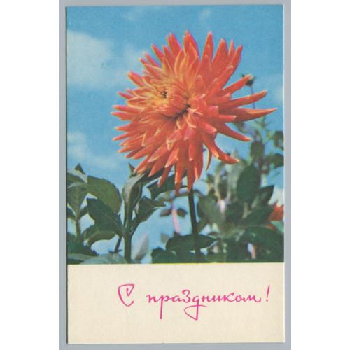 Поздравительная почтовая открытка лот 2719