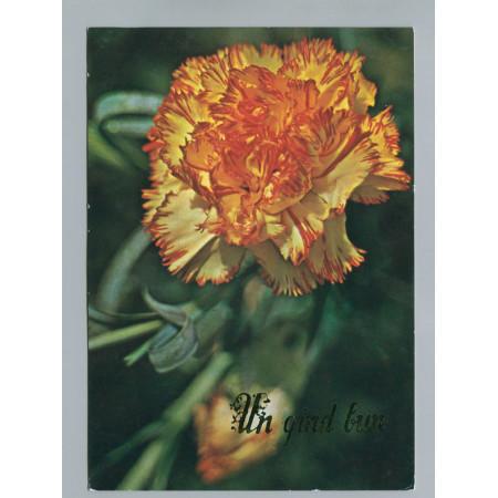 Поздравительная почтовая открытка лот 2775
