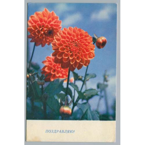 Поздравительная почтовая открытка лот 2996