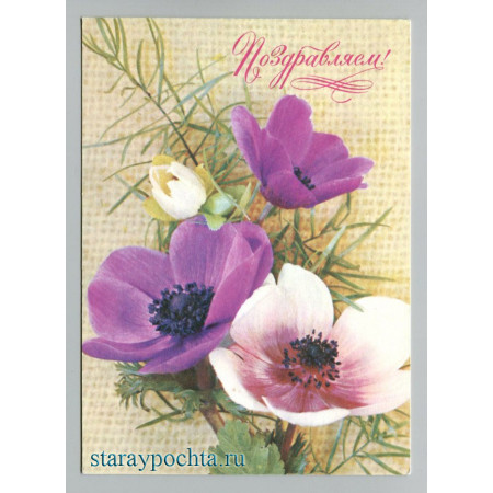 Поздравительная почтовая открытка лот 428