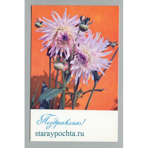 Поздравительная почтовая открытка лот 675