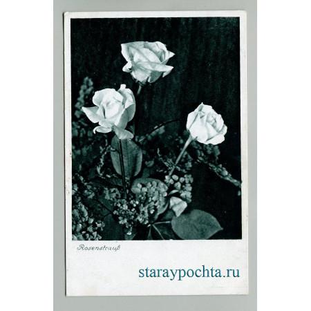 Роза Straub лот 777